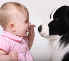 How to Get Your Pet Used to a Newborn