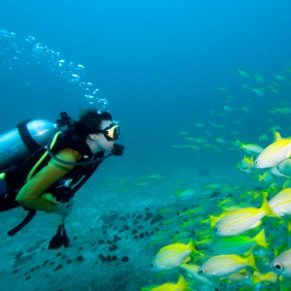 Top 6 Places to Learn How to Dive
