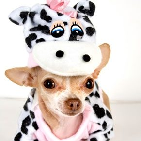 5 Halloween Costumes for Pets