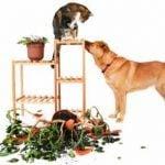 6 Animals Behaving Badly
