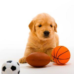 5 Sporty Animals