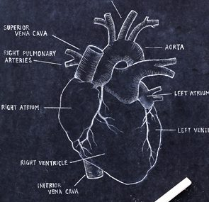 <h4></noscript>Ways to Prevent Heart Disease</h4>