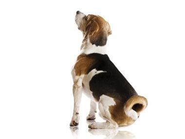 Secrets of pets #7: