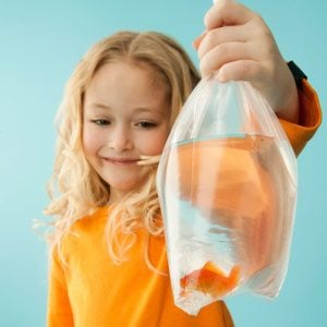 How To Care For Your Carnival Goldfish