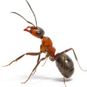 3. End the Ant Parade
