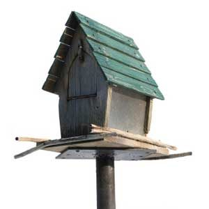 5. Keep Squirrels Away from the Bird Feeder