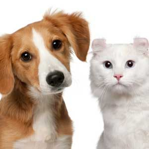 Surprising Facts About Cat People Versus Dog People