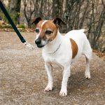 The 5 Worst Dog Training Mistakes