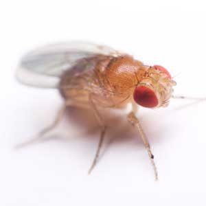 5. Trap Fruit Flies