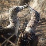 10 Awesome Wildlife Destinations