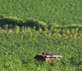 Canada's Role in Guatemala's Food Crisis