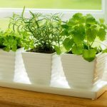 Protected: 7 Houseplant Care Tips