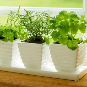 2. Make Wicks For Watering Plants