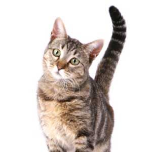 3. Strange Cat Behaviours: Cats Meow Incessantly?