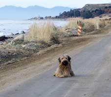 5 Incredible Canine Journeys