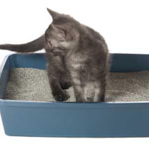 4. Deodorize the Litter Box
