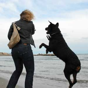 6. Questions About Dogs: Stopping Lunging