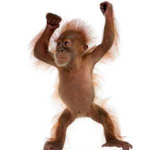 5. Exotic Pets: Primates