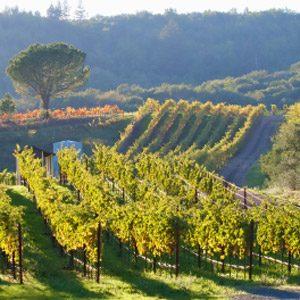1. Charles Krug Winery