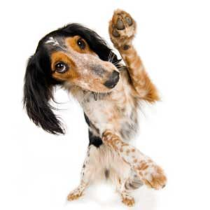 6. Enhance Your Dog's Familiarity
