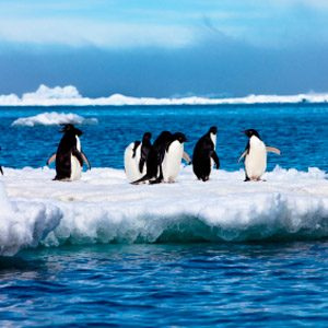 1. The Antarctic