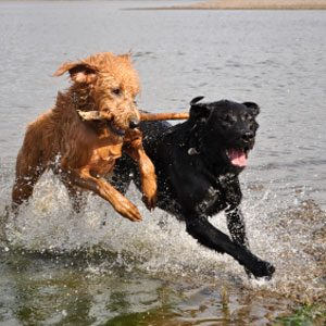 4. Questions About Dogs: Calming a Rambunctious Pup