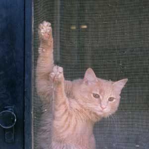 1. Mend Holes in Window Screens