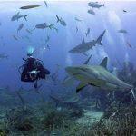 8 Exotic Adventures in Roatan