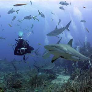 1. Dive with Sharks