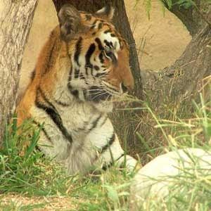 2. Gladys Porter Zoo