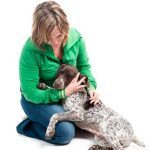4 Ways To Green Your Pet