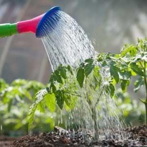 4. Keep the Water Flowing