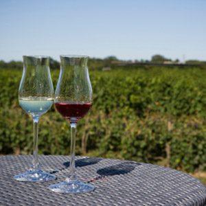 Winery Tour: Niagara-on-the-Lake, Ontario