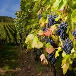 8 Tips for Planning the Perfect Wine Tour