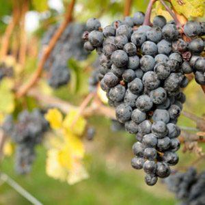 4. Inniskillin Wines
