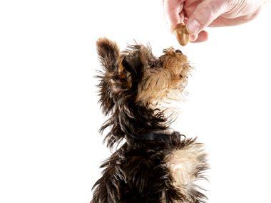 Pet care tips #10: