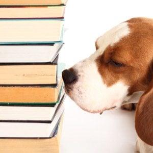 4. Keep Books Mold-Free