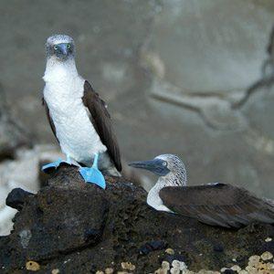 5. The Galapagos Islands