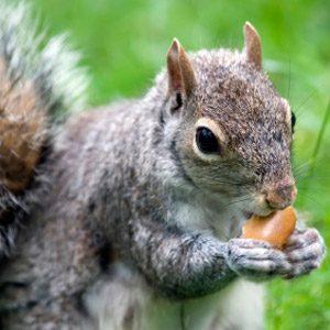 5. Squirrels