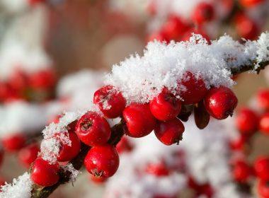 5. Wintergreen