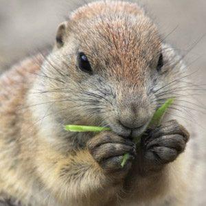 9. Groundhogs