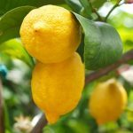 5 More Things To Do with Lemons