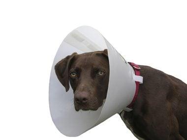 Animal care tips #16: