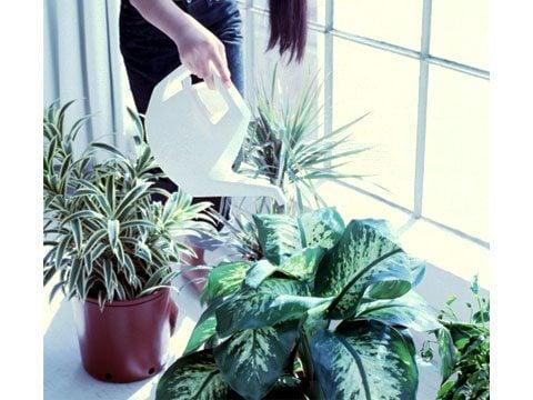 Water Indoor Plants Sparingly