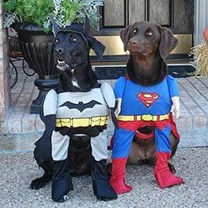 Poochman and Superpooch