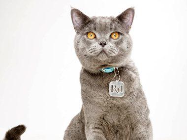 Pet care tips #14:
