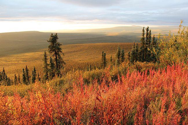 Eagle Plains Fall Tundra