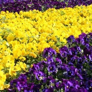10. Colour Your Garden Beautiful