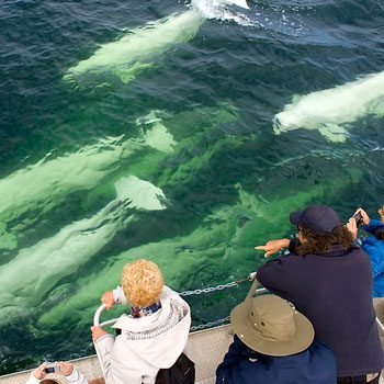 13-whalewatching_350