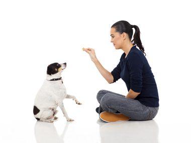 Dog training tips #20: